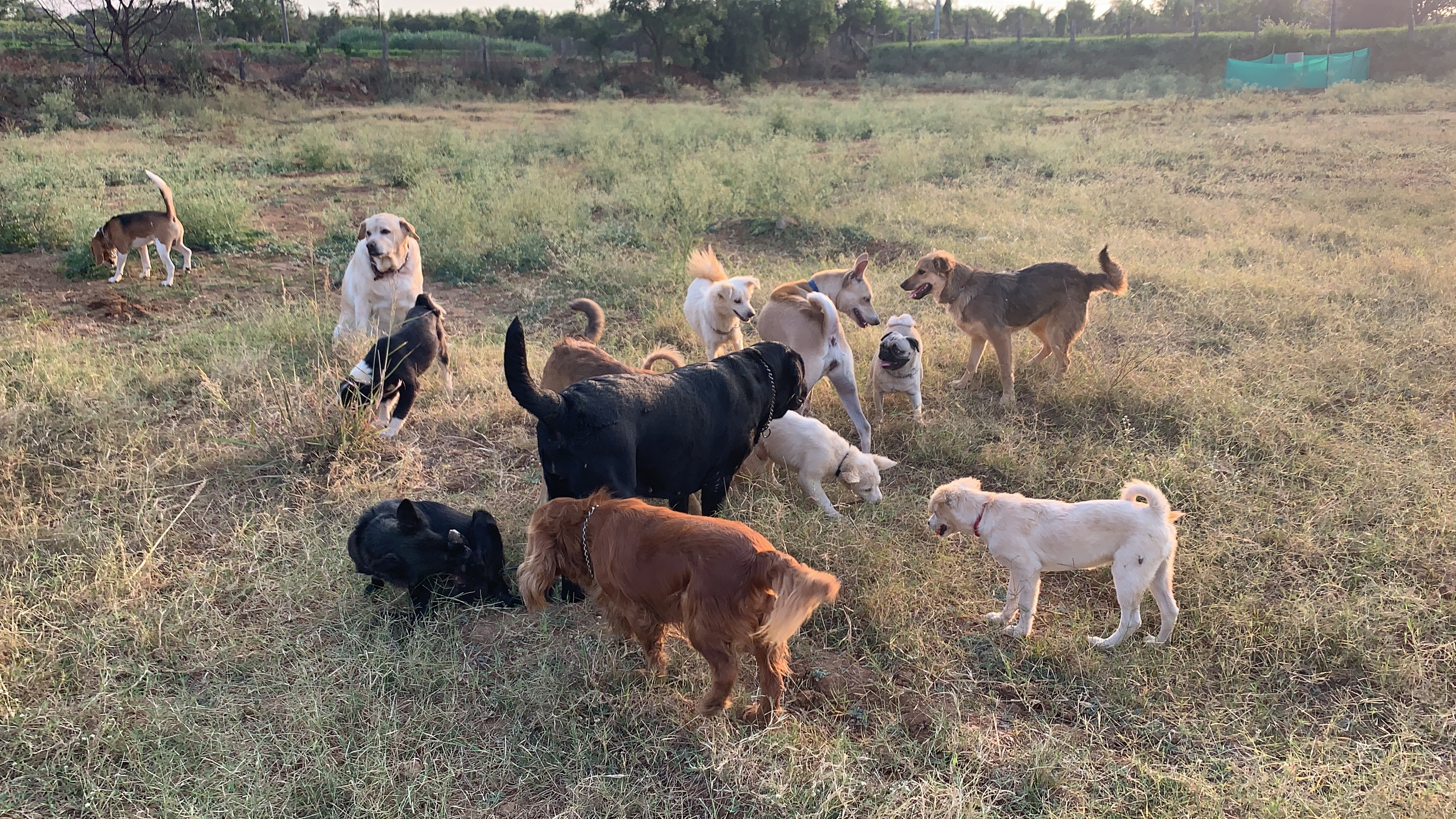 dog boarding Services in hyderabad, pet boarding Services in hyderabad