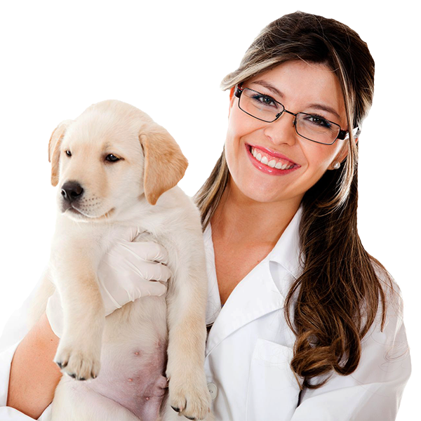 pet grooming services in hyderabad, dog training centre in hyderabad